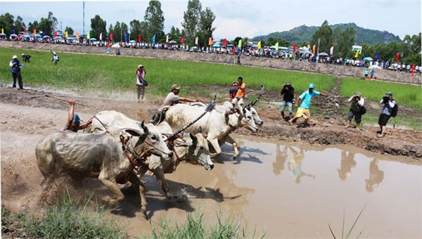 Phu Quoc Island, Ca Mau Cape, Cow Racing Festival, Vietnam economy, Vietnamnet bridge, English news about Vietnam, Vietnam news, news about Vietnam, English news, Vietnamnet news, latest news on Vietnam, Vietnam